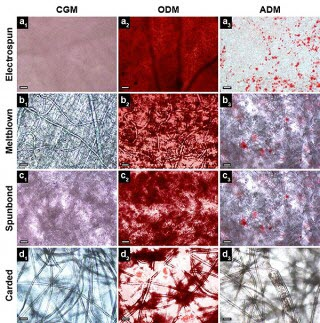 nonwoven fabrics types evaluated as tissue engineering scaffolds