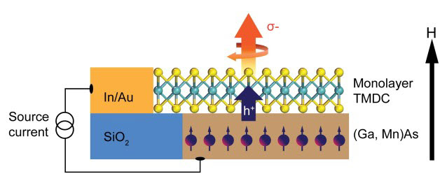schematic showing a TMDC monolayer coupled with a host ferromagnetic semiconductor