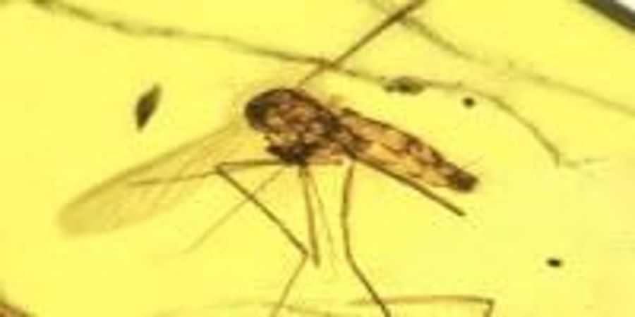 An Ancient Killer: Ancestral Malarial Organisms Traced to Age of Dinosaurs
