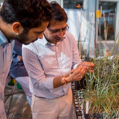 Breeder uses diversity to improve South Dakota winter wheat