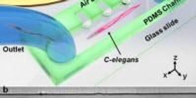 For the First Time, Microfluidic Devices Gently Rotate Small Organisms and Cells
