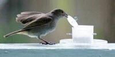 City Birds Are Smarter than Country Birds (Video)