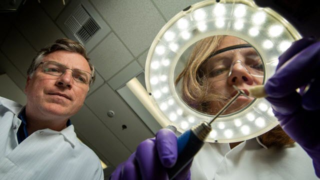 Postdoctoral researcher Tamy Buonasera (right) and Glendon Parker, adjunct associate rofessor in Environmental Toxicology and forensic science at UC Davis examine a tooth sample