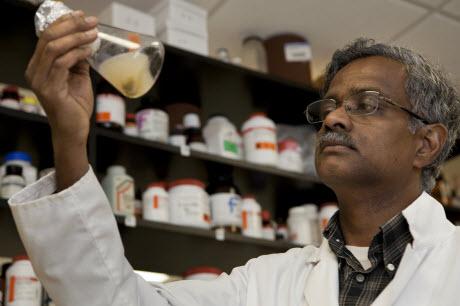 horticulture professor Balasubramanian Rathinasabapathi