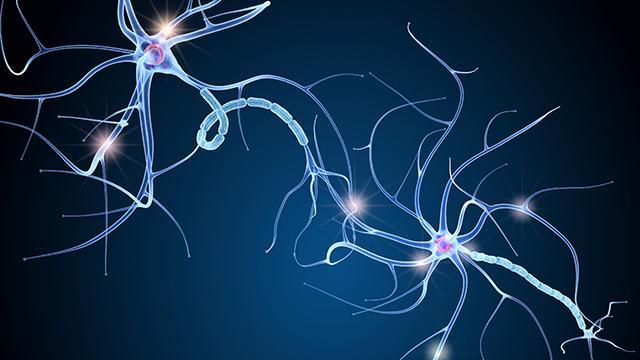 myelin on nerve cells