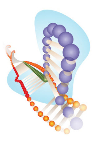 A Cas9 protein with guide RNA