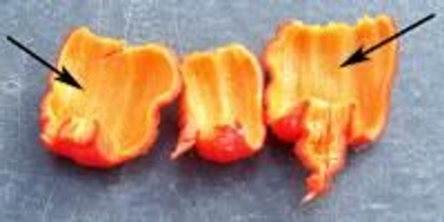 Researchers Investigate How Super-Hot Peppers Pack Their Powerful Punch