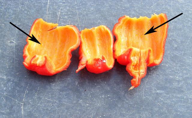 Capsaicinoid vesicles