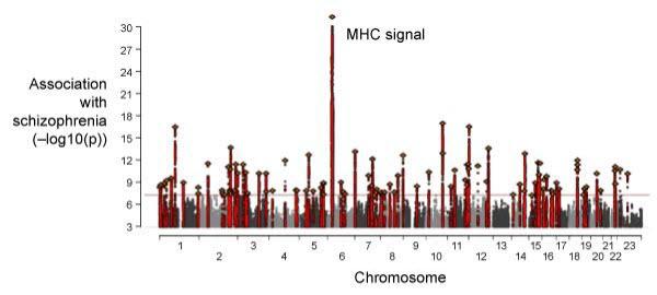 Manhattan plot from schizophrenia GWAS
