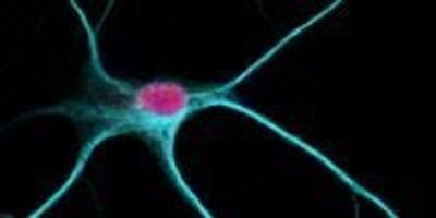Untapped Region in Brain Cell Offers Goldmine of Drug Targets for New Autism Treatments