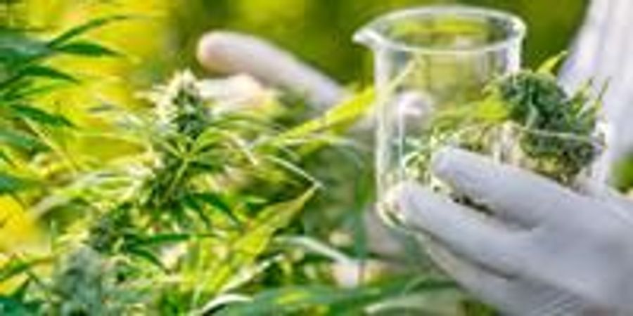 DEA Announces Steps Necessary to Improve Access to Marijuana Research