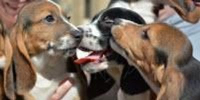 Research Leads to First Puppies Born by In Vitro Fertilization