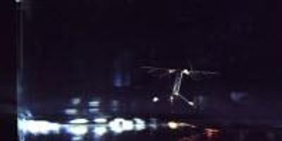 Harvard Lab Develops First Insect-Size Robots Capable of Flight and Swimming