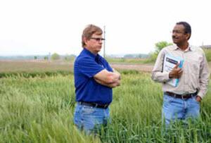 Resisting rust in Texas wheat