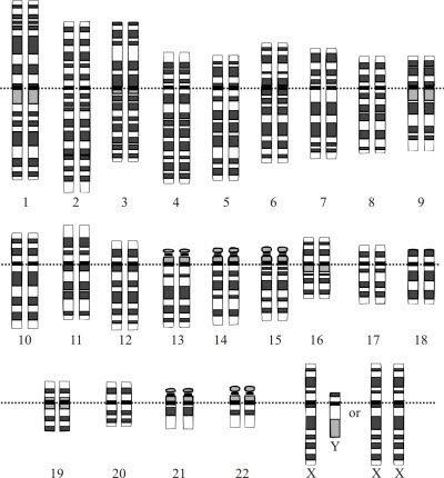 human genome editing research is essential, group says