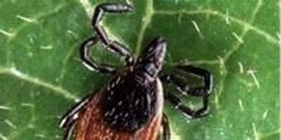 An Innovative New Diagnostic for Lyme Disease