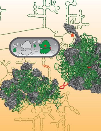 artificial ribosome
