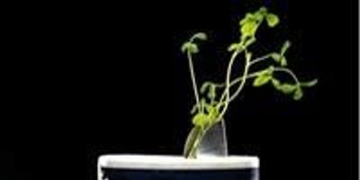 Scientists Successfully Inoculate, Grow Crops in Salt-Damaged Soil