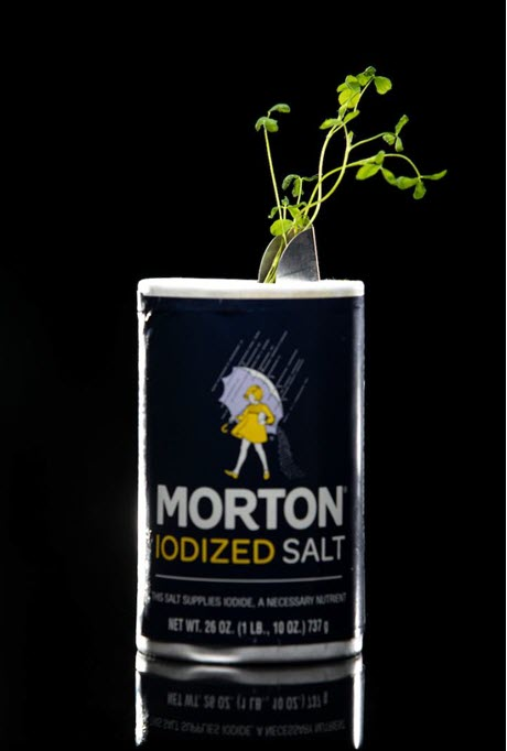 Photo Illustration of Alfalfa in Salt