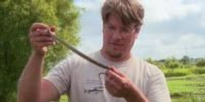 New Video Highlights Reptile and Amphibian Research