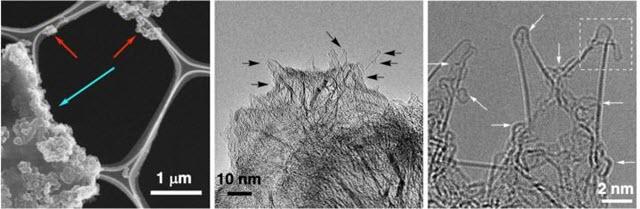 Microscopic Images