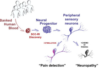 blood to neurons diagram