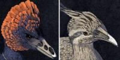 Tweaking the Beak: Retracing the Bird's Beak to Its Dinosaur Origins