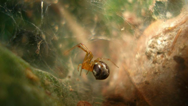 Researchers Find Hurricanes Drive the Evolution of More Aggressive Spiders