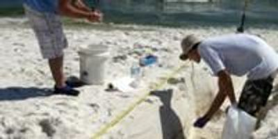 Study Details Impact of Deepwater Horizon Oil Spill on Beach Microbial Communities