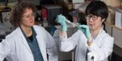 Ribose-seq Identifies and Locates Ribonucleotides in Genomic DNA