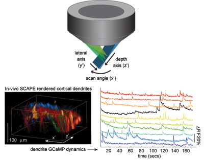 SCAPE's imaging geometry and neuronal firing