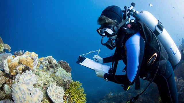 A Marine Scientist Collecting Coral Data