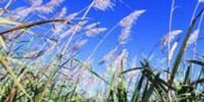 Major Indo-U.S. Advanced Bioenergy Consortium Launches