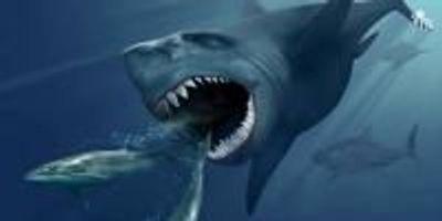 Do Mega Sharks Still Exist?