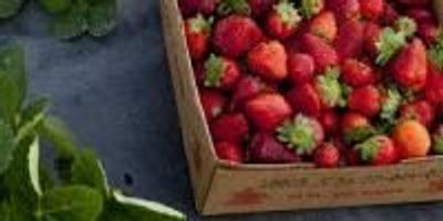 Researchers Could Improve How Companies Ship Fresh Produce