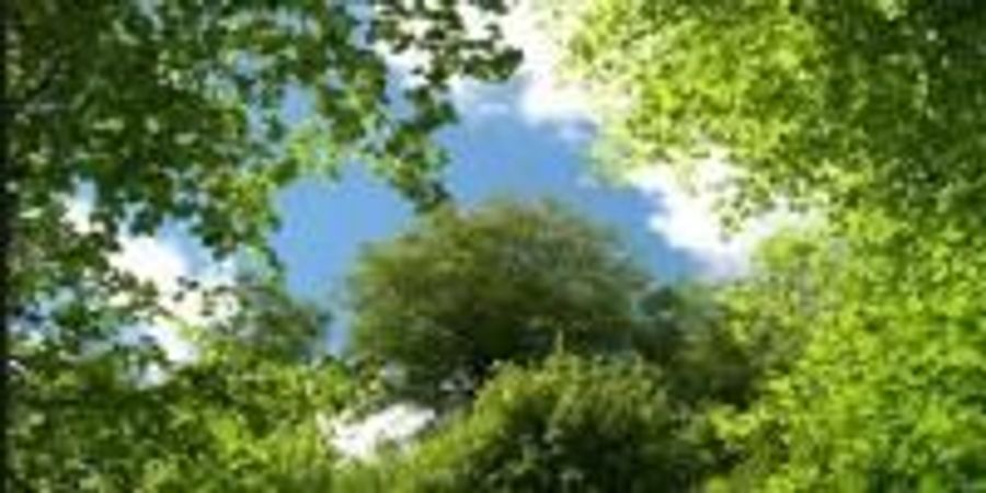 First National Survey Finds Trees Saving Lives