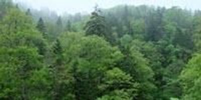 Climate Change Alters Tree Demography in Northern Forests