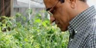 Horticultural Research Focuses on Increasing Antioxidant Content, Decreasing Disease