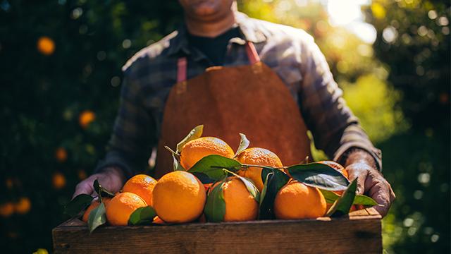 Researchers publish new study on citrus greening disease