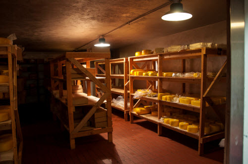 A dark basement filled with shelves of cheese