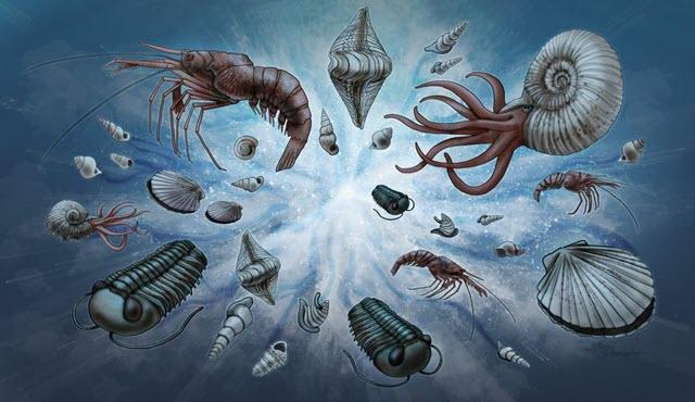Cambrian Explosion Illustration