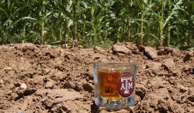 bourbon and corn