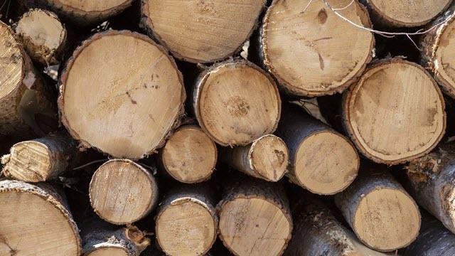 Bio Station Logging