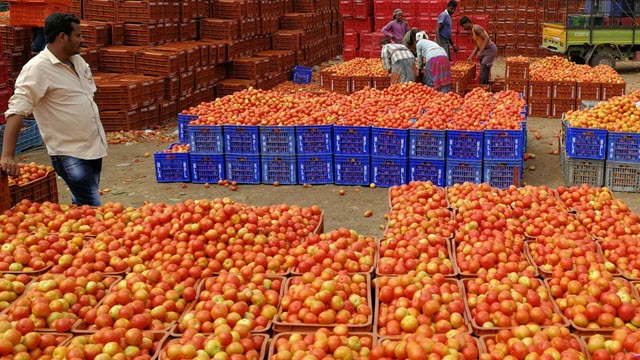 Hundreds of Boxes of Tomatoes in a Market