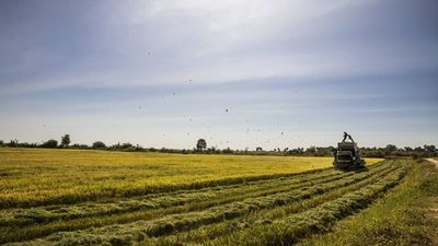 Warmer Temperatures Will Increase Arsenic Levels in Rice, Study Shows