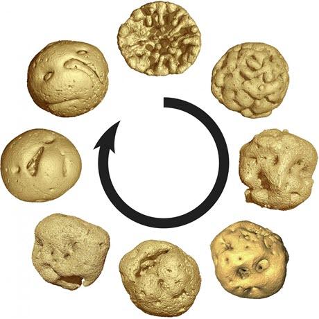 Embryology of 609 Million-Year Old Caveasphaera
