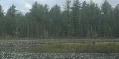 Meat-Eating Plant Discovered in Canada