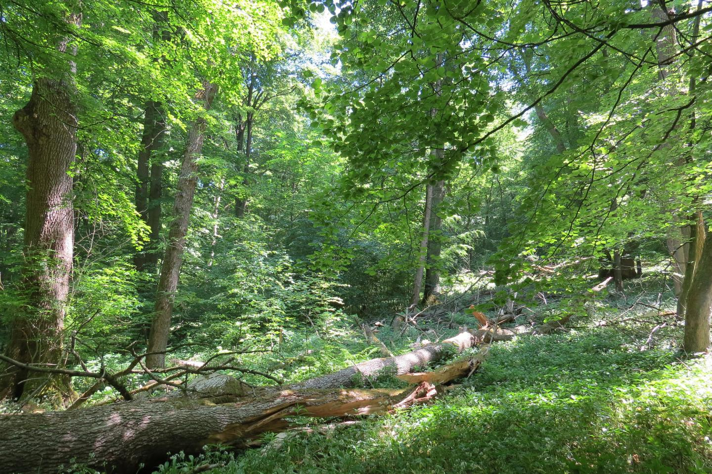 A Forest Scene in the Hainich National Park