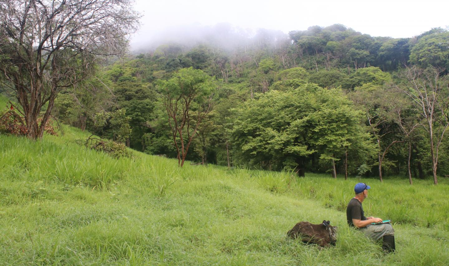 Ornithologist and cow in Costa Rica