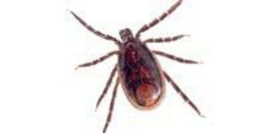 Dogs Contributing to Spread of Rocky Mountain Spotted Fever
